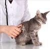 Ветеринарные клиники в Владикавказе